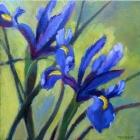 purple-irises